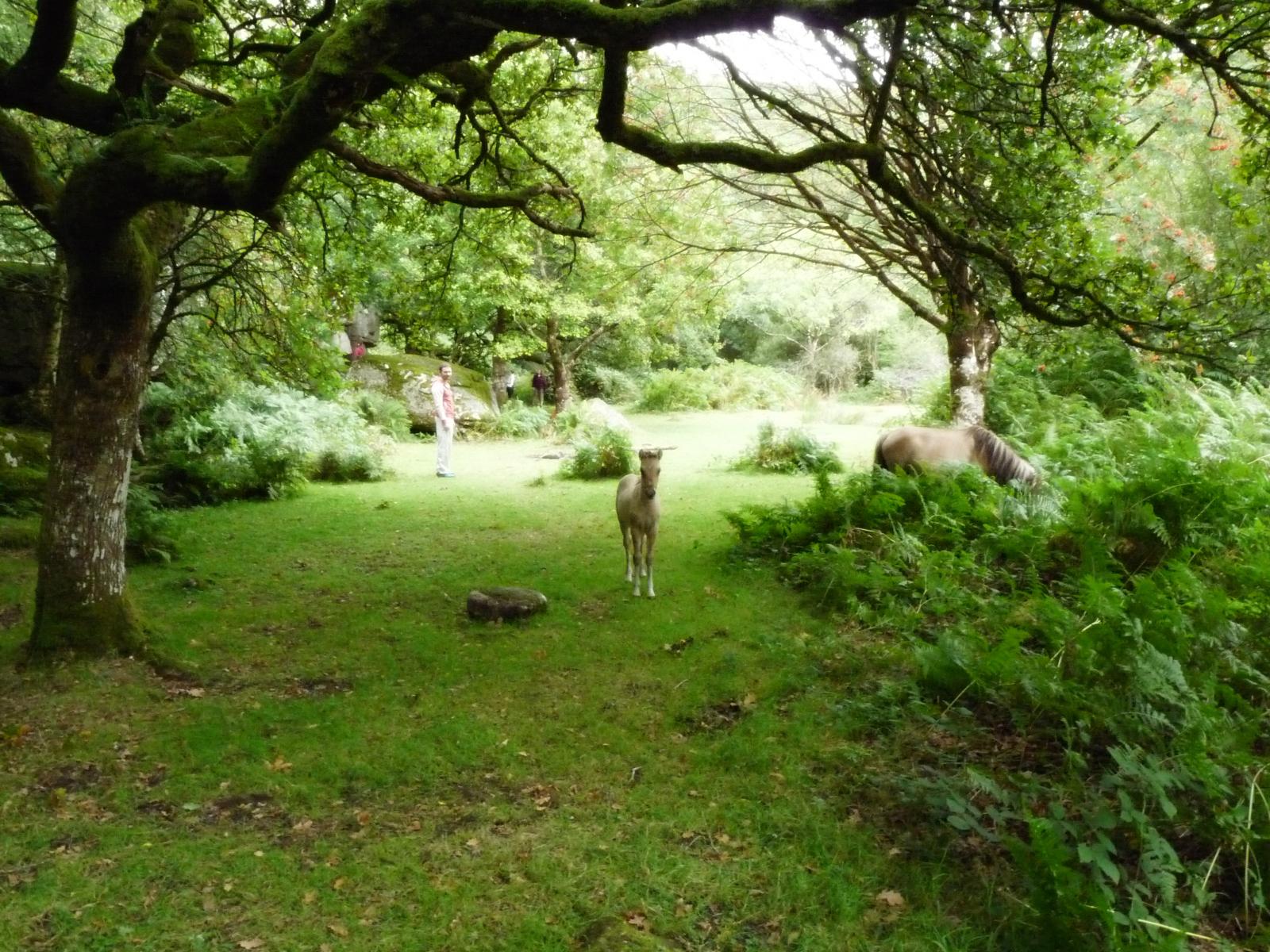 Dartmoor-Pony-1