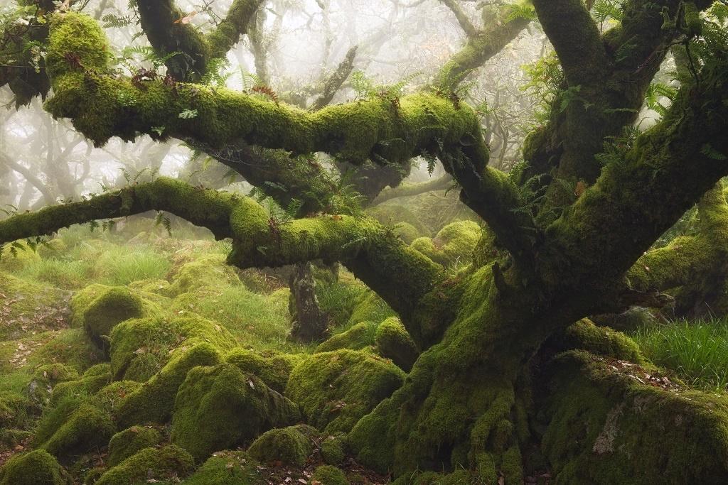 Dartmoor-Wistmans-Wood-M