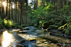 breaking-light-stones-forest-sky-through-river